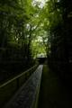 『京都新聞写真コンテスト 梅雨の高桐院』