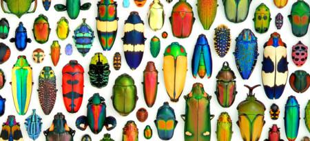 Göztepe Böcek İlaçlama