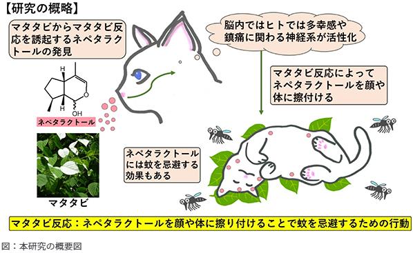 f:id:gyuuhomura:20210121231656p:plain