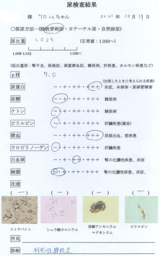 f:id:gyuuhomura:20211019141444p:plain