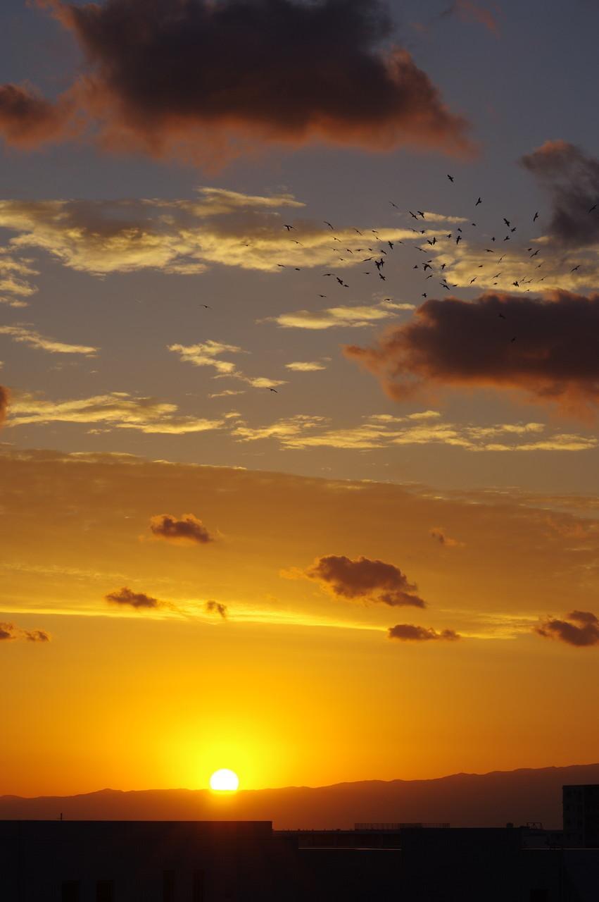 鳥の群れと夕陽
