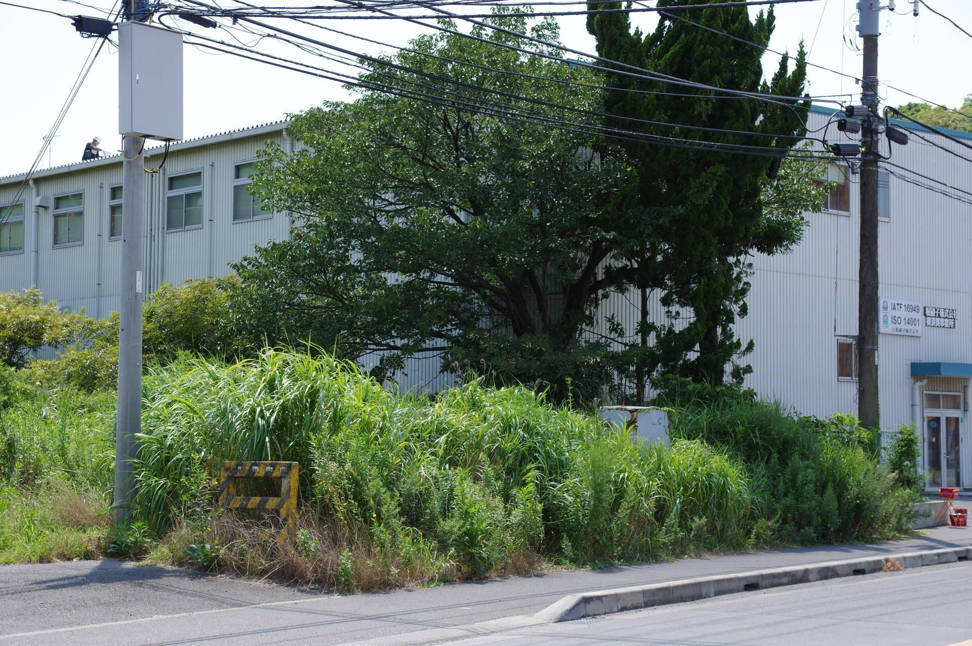 草に埋もれている踏切跡と機器箱