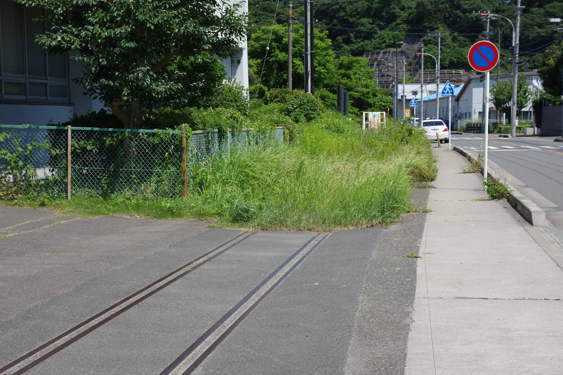 深く草に埋もれた線路と踏切跡