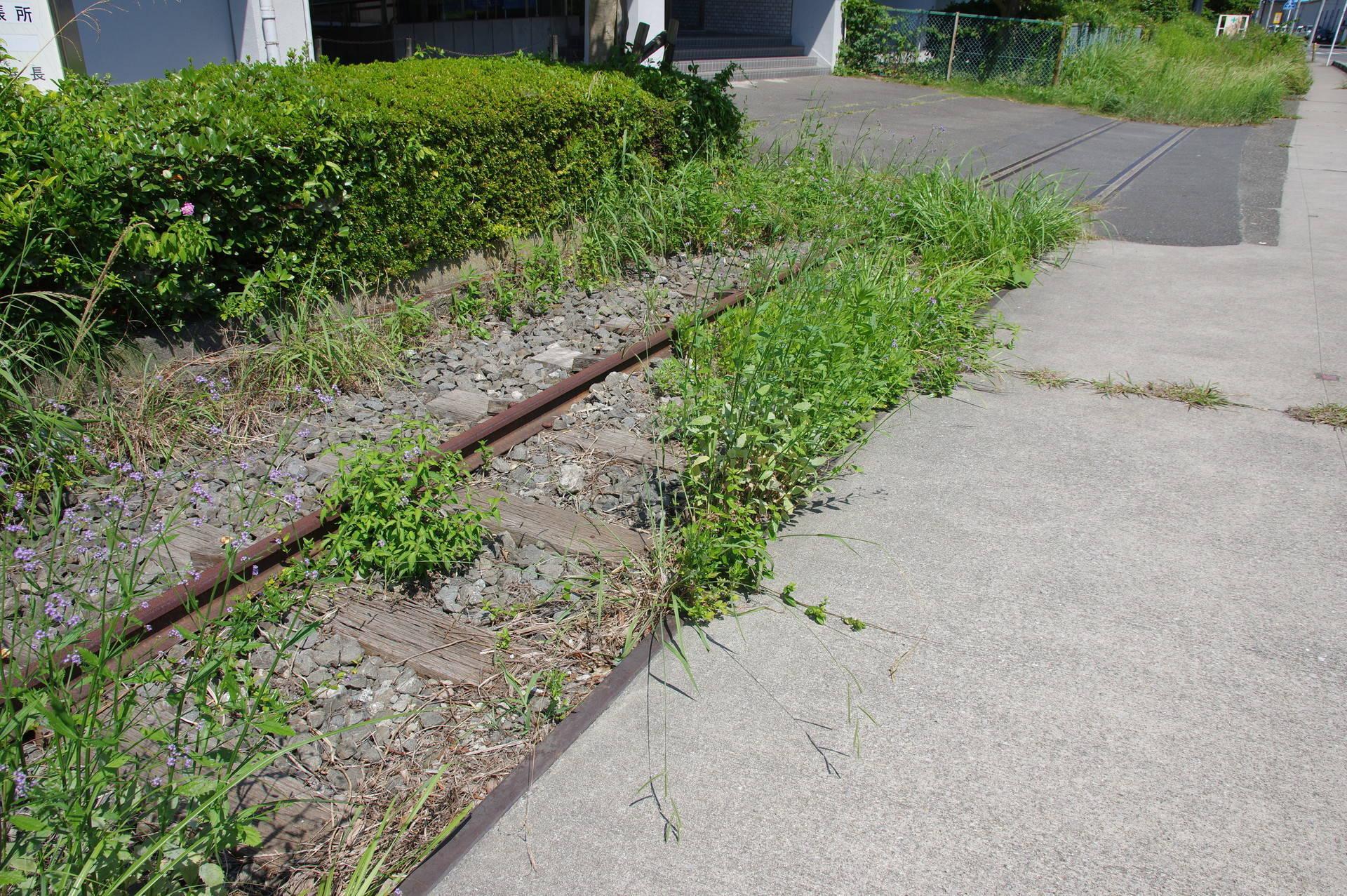 小さな花が咲いている線路跡