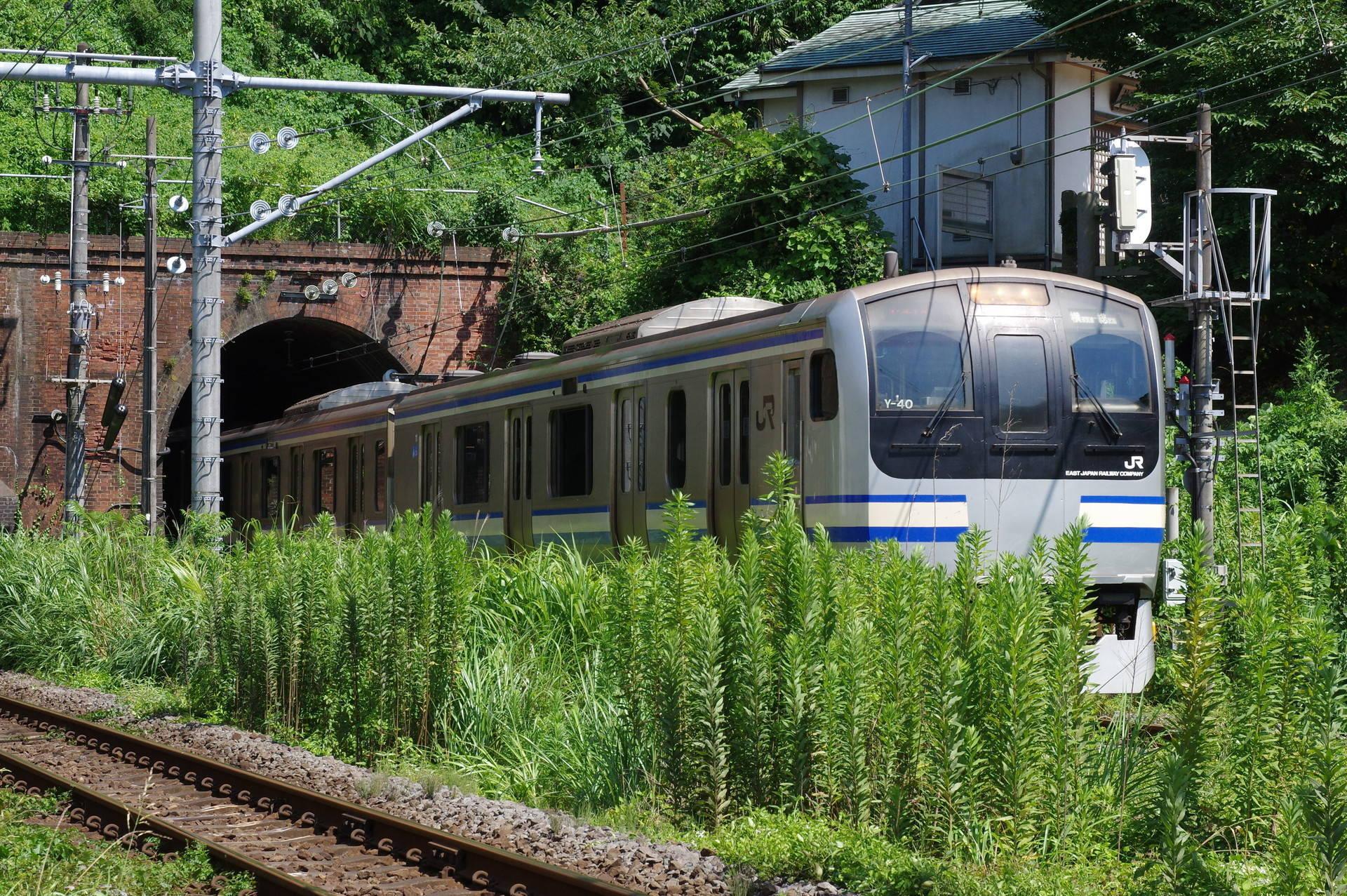田浦トンネルを出て田浦踏切に差し掛かるE217系