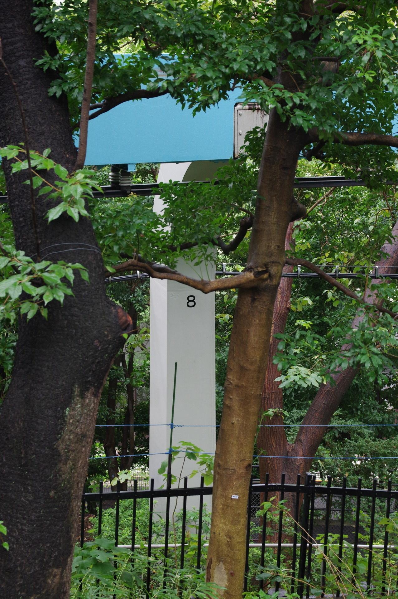 木々の間から辛うじて見える8番橋脚