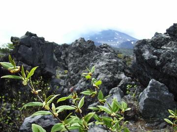f:id:gzutetsu:20060520105841j:image