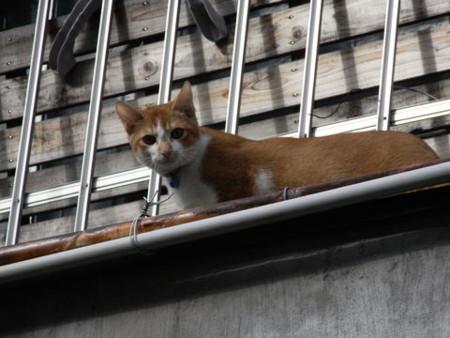 f:id:gzutetsu:20090101161619j:image