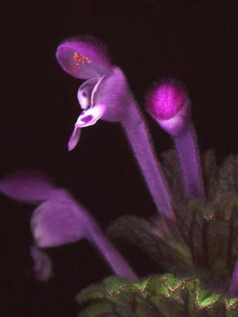f:id:gzutetsu:20090131010842j:image