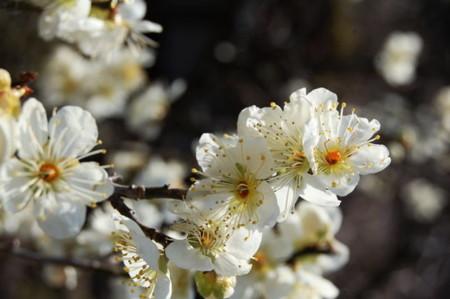 f:id:gzutetsu:20090201003209j:image