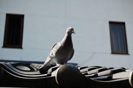 f:id:gzutetsu:20090201003233j:image