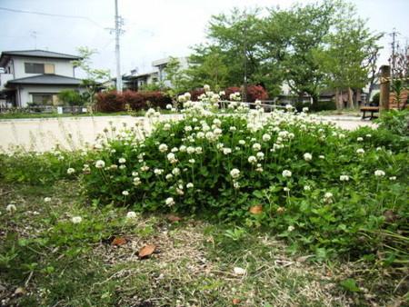 f:id:gzutetsu:20090329184635j:image