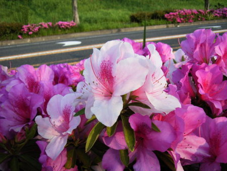 f:id:gzutetsu:20090329184638j:image