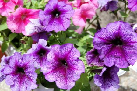 f:id:gzutetsu:20090329185807j:image