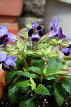 f:id:gzutetsu:20090329185810j:image