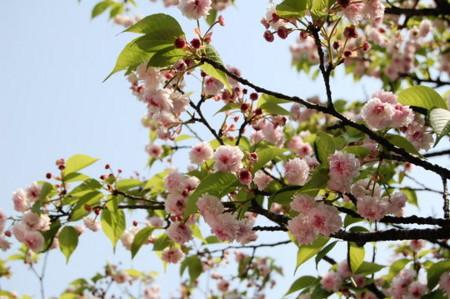 f:id:gzutetsu:20090404105826j:image