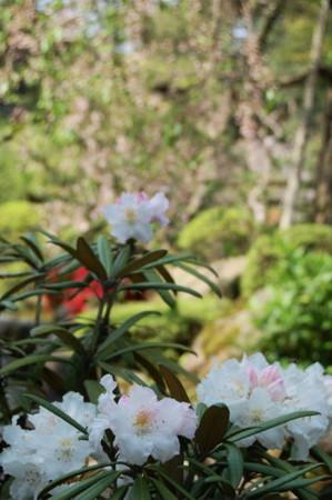 f:id:gzutetsu:20090404105837j:image