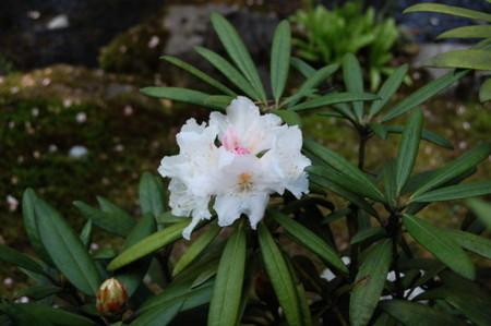 f:id:gzutetsu:20090404105841j:image