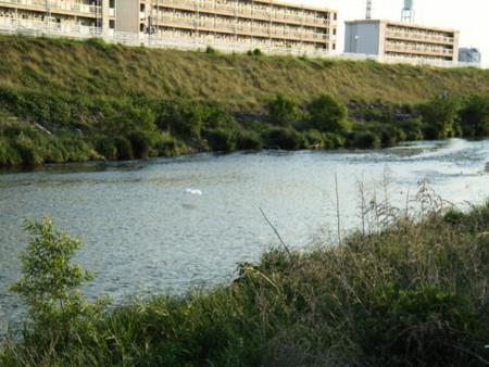 f:id:gzutetsu:20090416235759j:image