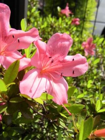f:id:gzutetsu:20090510104141j:image