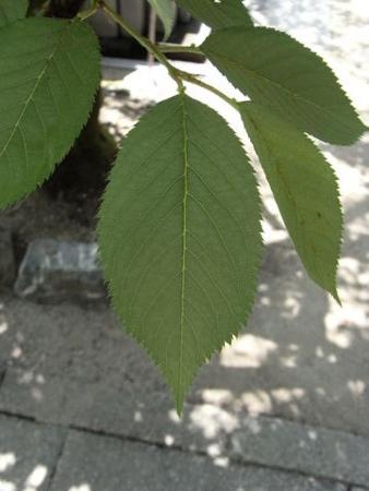 f:id:gzutetsu:20090517133419j:image