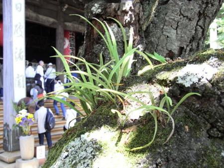 f:id:gzutetsu:20090517133422j:image