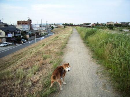 f:id:gzutetsu:20090531154831j:image