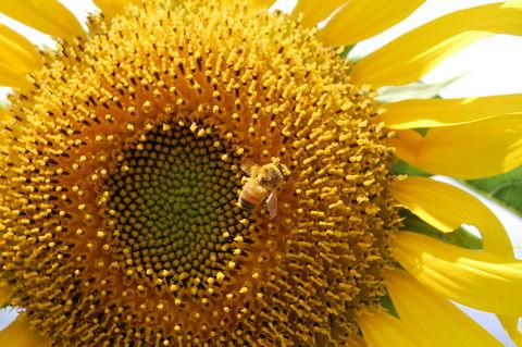 f:id:gzutetsu:20090811113534j:image