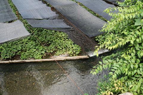 f:id:gzutetsu:20090812132721j:image