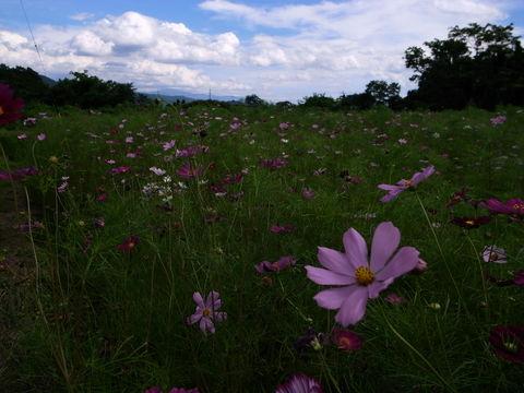 f:id:gzutetsu:20090812142656j:image