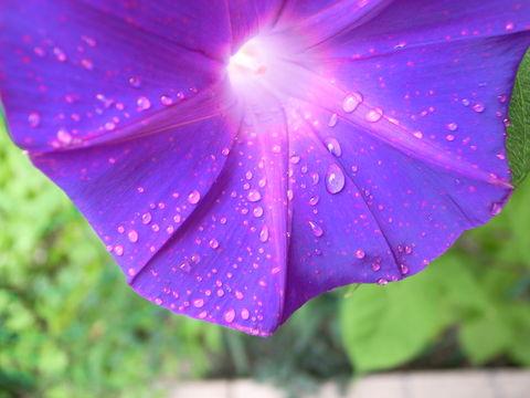 f:id:gzutetsu:20090822103141j:image