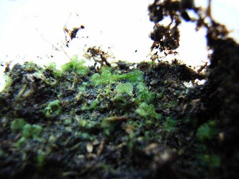 f:id:gzutetsu:20090922144920j:image