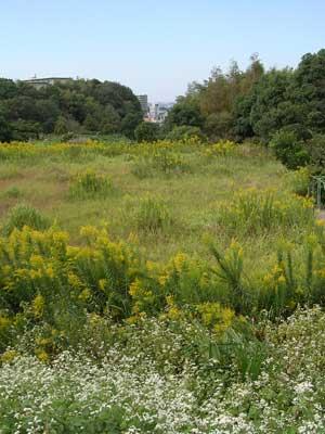 f:id:gzutetsu:20091020003421j:image