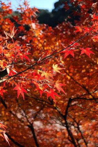 f:id:gzutetsu:20091206100852j:image