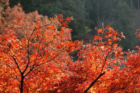 f:id:gzutetsu:20091206101006j:image