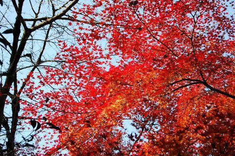 f:id:gzutetsu:20091206102758j:image
