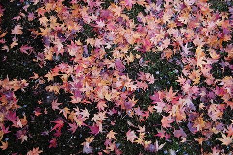 f:id:gzutetsu:20091206103008j:image