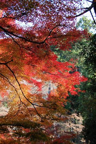 f:id:gzutetsu:20091206103329j:image