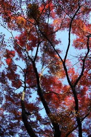 f:id:gzutetsu:20091206103338j:image