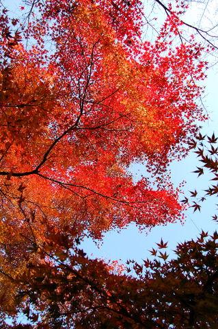 f:id:gzutetsu:20091206103435j:image