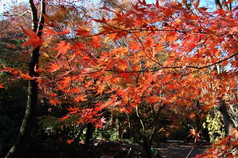 f:id:gzutetsu:20091206103823j:image