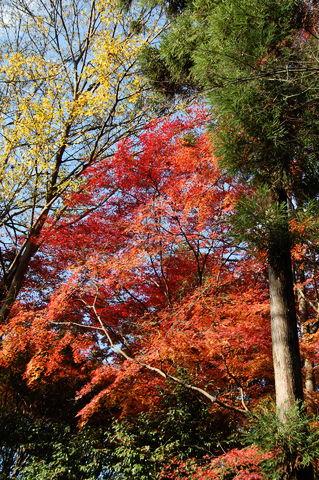 f:id:gzutetsu:20091206103936j:image