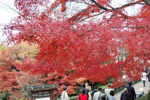 f:id:gzutetsu:20091206110238j:image