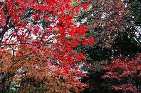 f:id:gzutetsu:20091206123908j:image