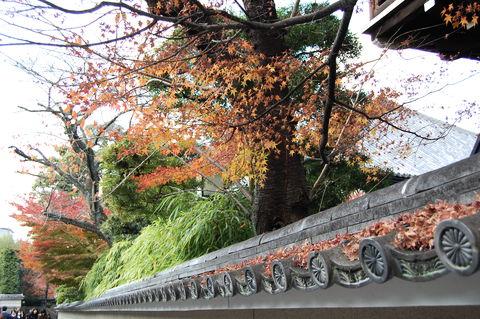 f:id:gzutetsu:20091206133658j:image