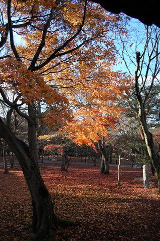 f:id:gzutetsu:20091206150607j:image
