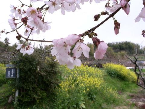 f:id:gzutetsu:20100320134931j:image