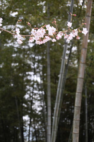 f:id:gzutetsu:20100320135237j:image