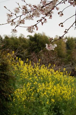 f:id:gzutetsu:20100320140415j:image