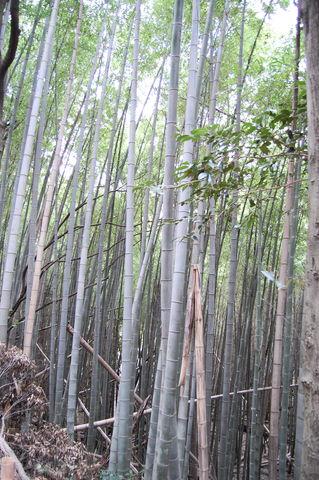 f:id:gzutetsu:20100320142902j:image